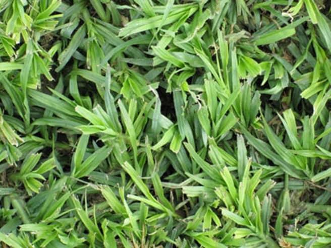 Grass Factory - LM