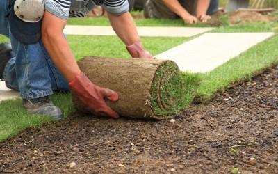 Planting Grass 101