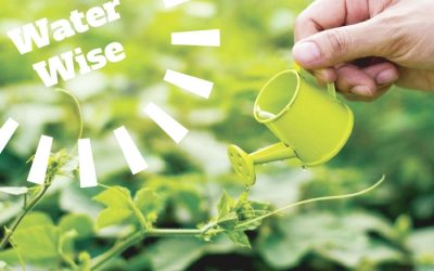 Water Wise – 12 Water Saving Tips to Take Care of Your Lawn