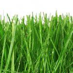 Grass Factory