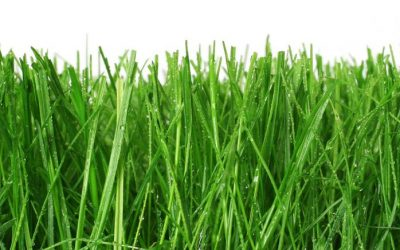 Is your garden a desert? We have a grass installation promotion, let us fix your lawn