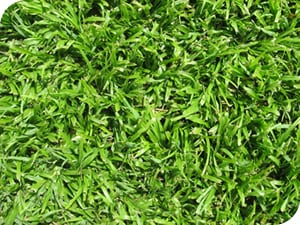 Grass Type - LM