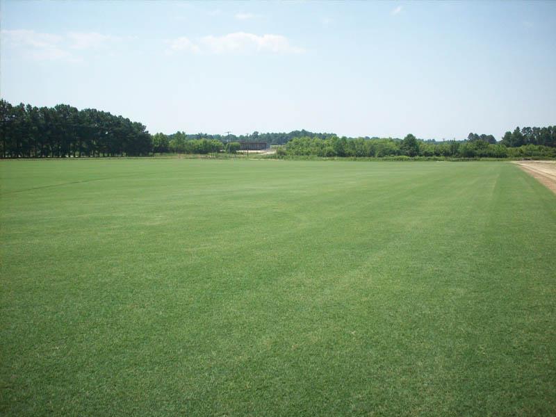 Grass Factory - Tifsport