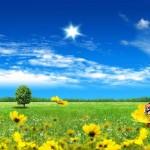 Grass Factory & Eco Organics Summer