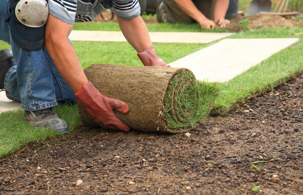 Grass Planting 101
