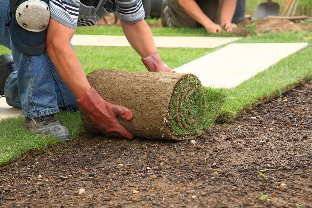 Grass Planting 101 Grass Factory Eco Organics