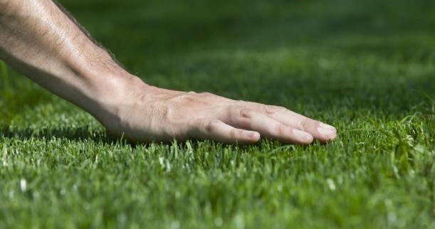 Grass Factory Planting Grass 101