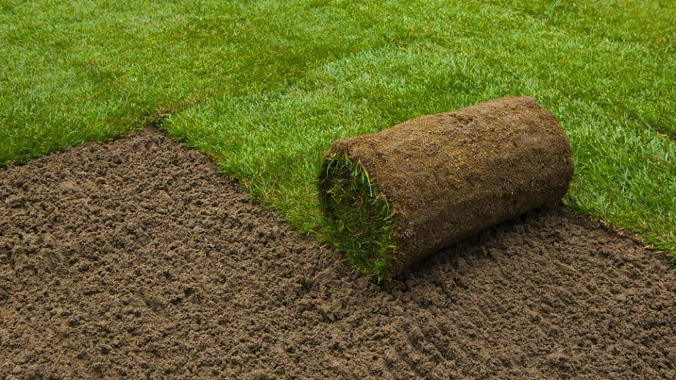 How to take care of your newly purchased grass and soil
