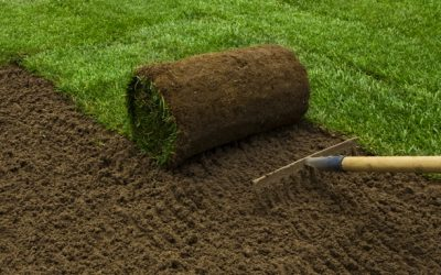Winter Grass Installation Promotion