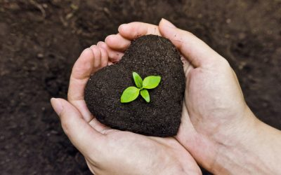 Autumn Compost Promotion