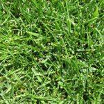 Grass Factory - Evergreen