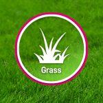 Grass Factory Grass