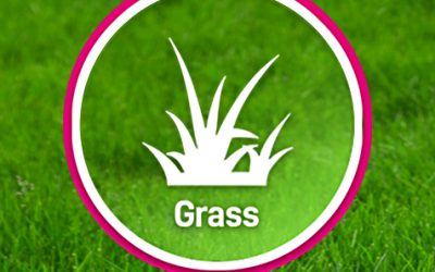 Which grass type is suitable for your garden?