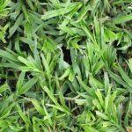 Grass Factory - LM Grass