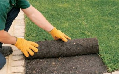 Establishing a new lawn can be a daunting task