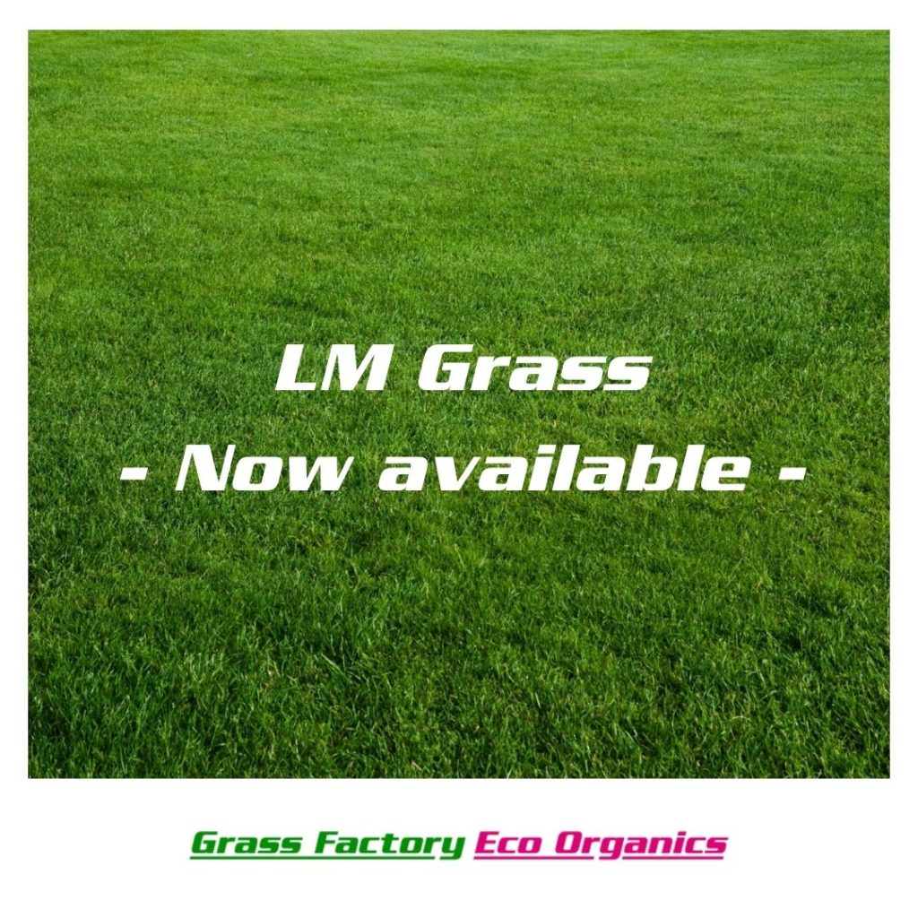 LM grass for sale